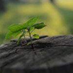 O cuidado com a Criação como obra de misericórdia