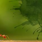 Como aprendi a orar e perseverar observando uma formiga